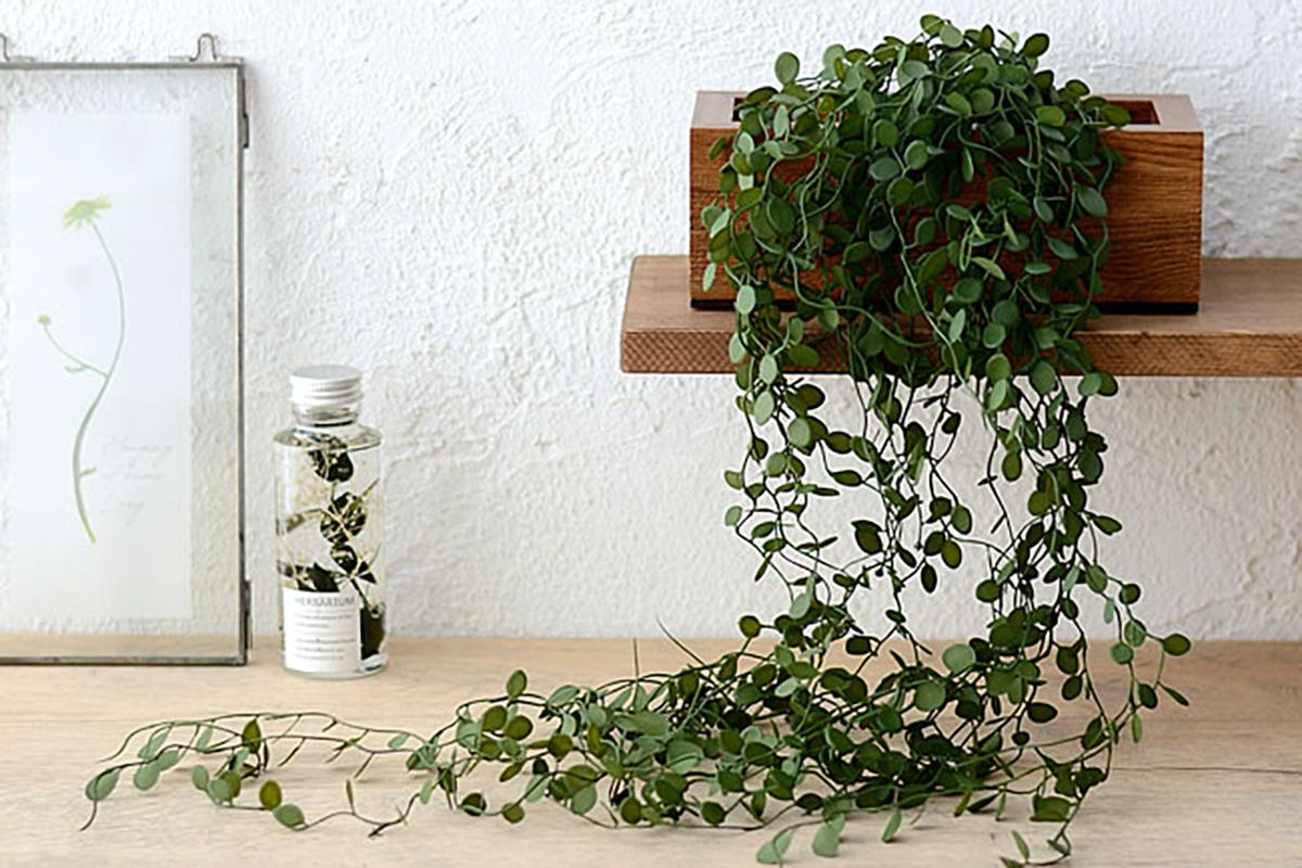 観葉植物とリノベーション